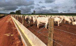 Como o confinamento aproxima a pecuária do nível de gestão da agricultura? (Crédito: Reprodução)