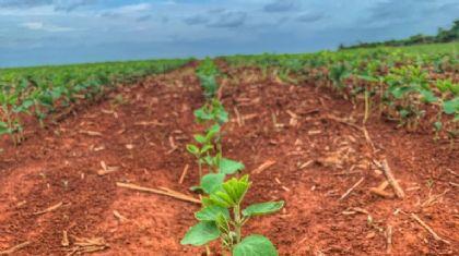 Semeadura da soja chega a quase 70% em MT