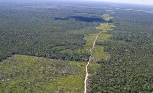 Desmatamento na Amazônia é conto do vigário em escala planetária (Crédito: Reprodução)