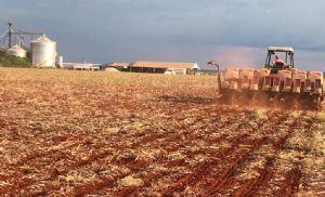 RS: soja está em desenvolvimento vegetativo e plantio atinge 35% da área estimada (Crédito: Tiago Seiffert)