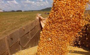 Alerta de baixa para o milho na B3 (Crédito: Repórter Agro/Tiago Seiffert)