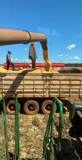 Colheita da safra do milho no Vale do Araguaia segue a todo vapor, registro em Canabrava do Norte