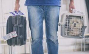 Viagens internacionais com animais de estimação exigem passaporte ou certificado veterinário (Crédito: Reprodução)