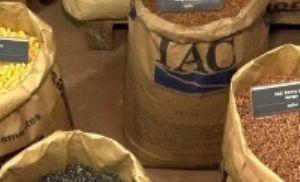 IAC investe em sementes genéticas (Crédito: Reprodução)