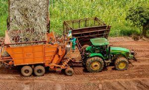 Do campo à indústria: rastreio de matéria-prima atende demandas do mercado por sustentabilidade e eficiência (Crédito: Reprodução)