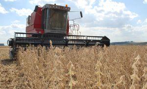 Soja: Mato Grosso puxa colheita no Brasil e registra alta produtividade (Crédito: Reprodução)