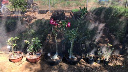 Curso de Jardinagem - Senar MT