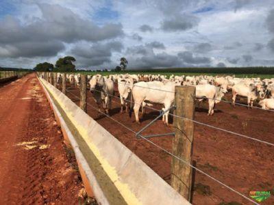 Como o confinamento aproxima a pecuária do nível de gestão da agricultura?