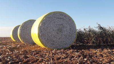 Avanço para comercialização de algodão no Estado