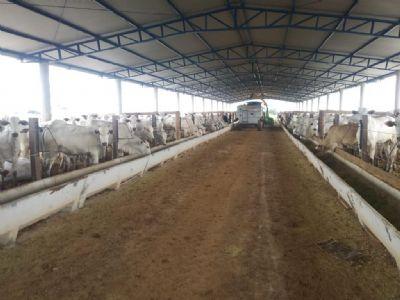 Projeto de confinamento de bovinos da Empaer atrai produtores que desejam investir na tecnologia