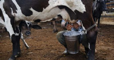 Preço do leite ao produtor tem nova alta