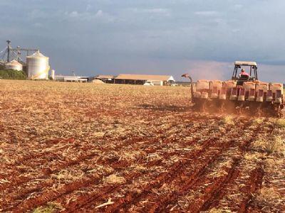 Plantio da soja chega a 16,3% no país. Confira a situação de cada estado!