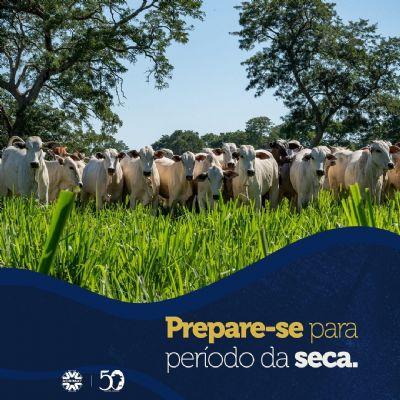 Acrimat alerta pecuaristas para o período da seca