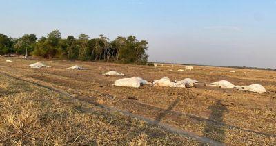 Queda de fio de energia mata 18 cabeças de gado em Querência