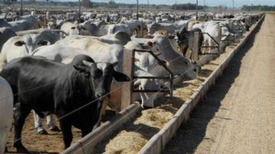 Mato Grosso bate recorde histórica em exportação de carne bovina