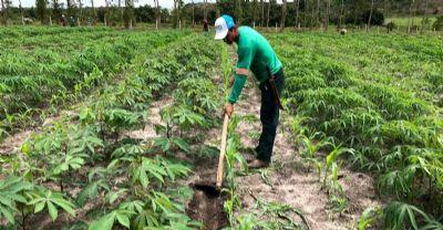Projeto transforma solos degradados em produção e renda para agricultores no Pará