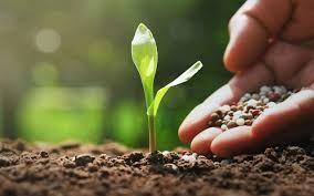 Fertilizantes/EUA: lucro da CF Industries aumenta 12,2% no 4º trimestre