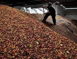 Brasil exporta 2,7 milhões de sacas de café em fevereiro