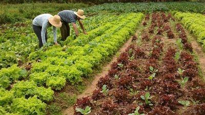 Governo de Confresa faz chamada pública para produtores do município fornecerem alimentos para merenda escolar