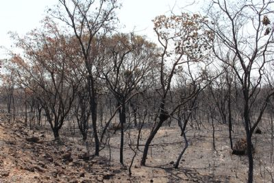 Aumenta a preocupação dos produtores com os incêndios florestais no período da seca