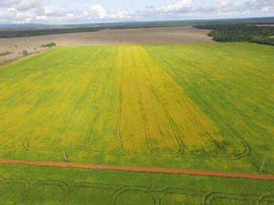 China tem importação recorde de soja em junho, com grandes carregamentos do Brasil